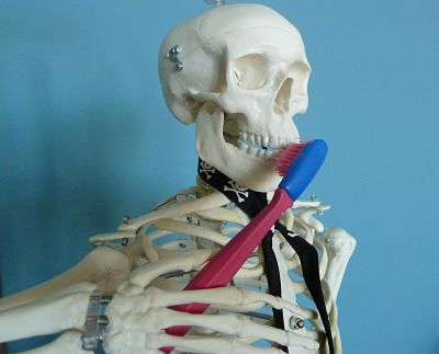 Skeleton brushing teeth