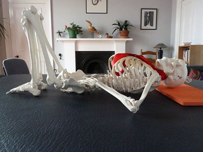 Model skeleton demonstrating the position for Alexander Technique lie-down practice